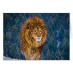 Barbary Lion  (digital) Greeting Card