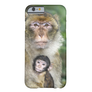 Barbary Macaque . Adulte with babyMacaca Barely There iPhone 6 Case