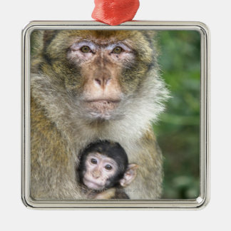 Barbary Macaque . Adulte with babyMacaca Christmas Ornament