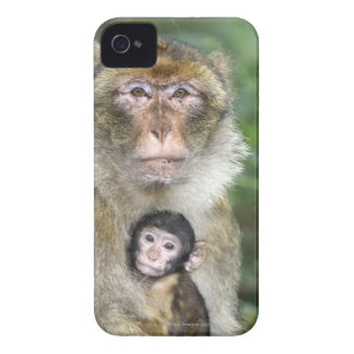 Barbary Macaque . Adulte with babyMacaca iPhone 4 Case-Mate Case