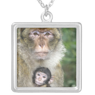 Barbary Macaque . Adulte with babyMacaca Silver Plated Necklace