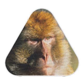 Barbary Macaque (Macaca Sylvanus) Portrait