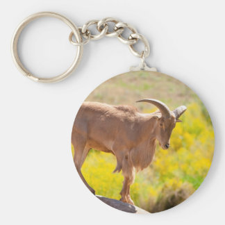 Barbary sheep basic round button key ring