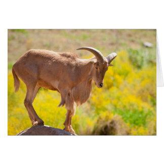 Barbary sheep greeting card