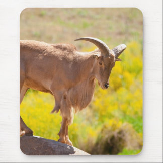 Barbary sheep mouse pad
