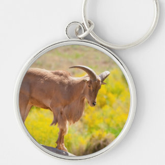 Barbary sheep Silver-Colored round key ring