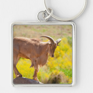 Barbary sheep Silver-Colored square key ring
