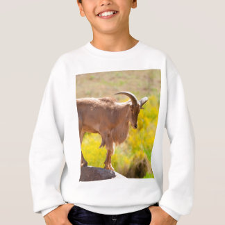 Barbary sheep sweatshirt