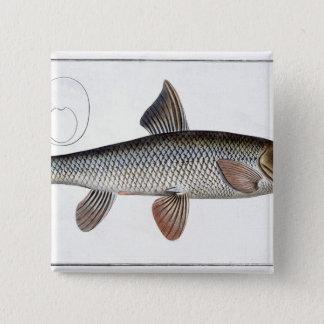 Barbel (Cyprinus Barbus) plate XVIII from 'Ichthyo 15 Cm Square Badge