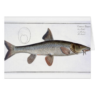 Barbel (Cyprinus Barbus) plate XVIII from 'Ichthyo Card