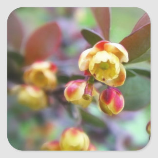 Barberry Flowers Stickers
