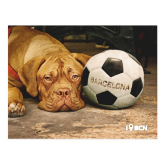 Barcelona's soccer fanatic dog postcard