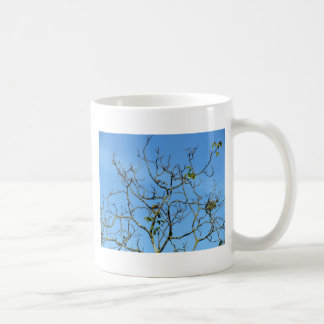 Bare chestnut tree in a sunny day coffee mug