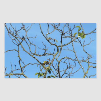 Bare chestnut tree in a sunny day rectangular sticker
