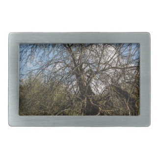 bare tree belt buckle