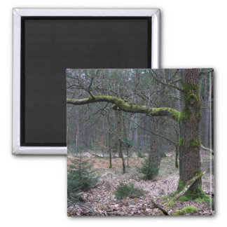 Bare tree in a forest refrigerator magnets