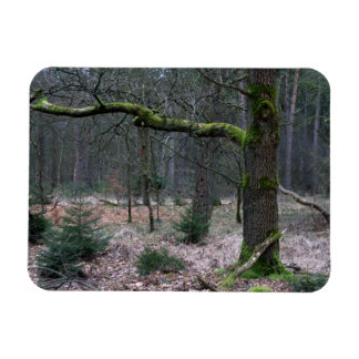 Bare tree in a forest magnet