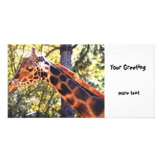Baringo Giraffe Photo Cards