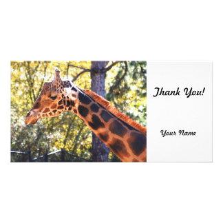 Baringo Giraffe Picture Card