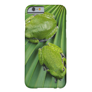 Barking Tree Frog (hyla gratiosa) Barely There iPhone 6 Case