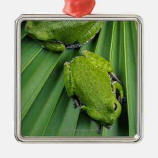 Barking Tree Frog (hyla gratiosa) Christmas Ornament