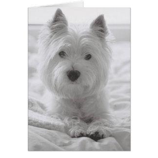Barko in Bed Card