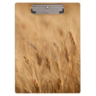 Barley field clipboard
