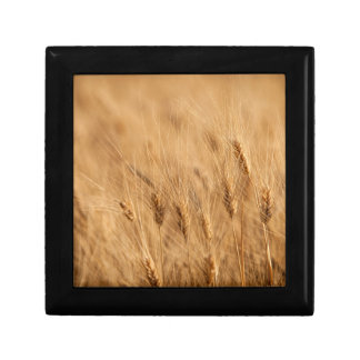 Barley field gift box