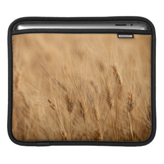 Barley field iPad sleeve