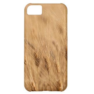 Barley field iPhone 5C case