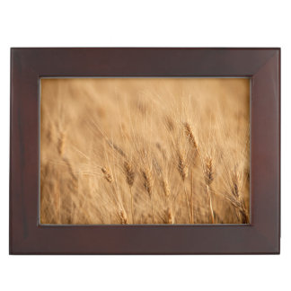 Barley field keepsake box