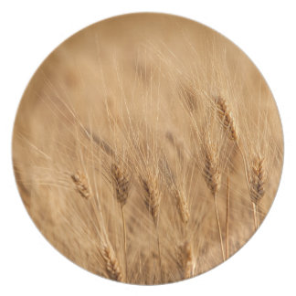 Barley field plate