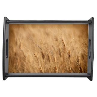 Barley field serving tray