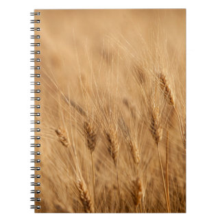 Barley field spiral note books