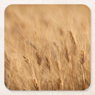 Barley field square paper coaster