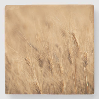 Barley field stone coaster