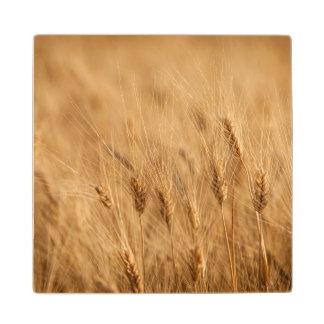 Barley field wood coaster