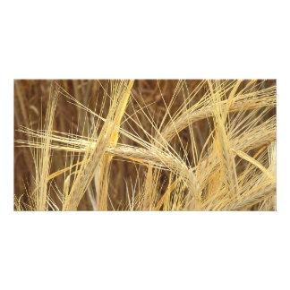 Barley Personalised Photo Card