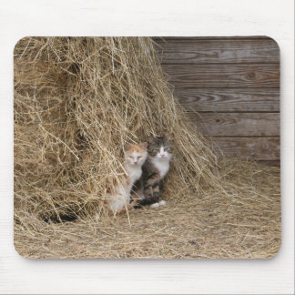 Barn Cats Mouse Mat