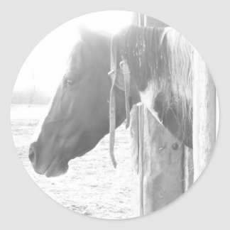 Barn Horse/Black and White Photography Round Sticker