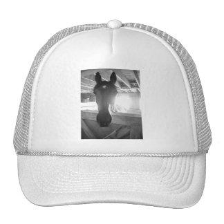 Barn Horse/Black & White Photography Cap
