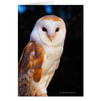 Barn Owl 2 Card