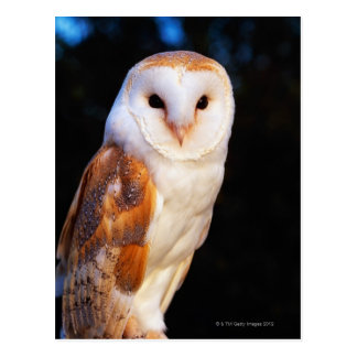 Barn Owl 2 Postcard