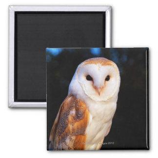 Barn Owl 2 Square Magnet
