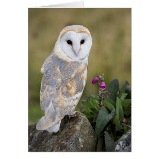 Barn Owl and Foxglove Greeting Card