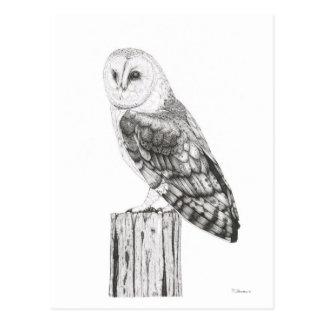 Barn Owl - Blank Postcard