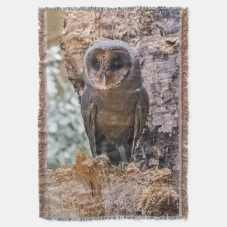 Barn owl blanket