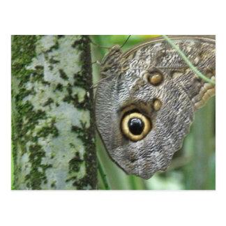 Barn Owl Butterfly Postcard