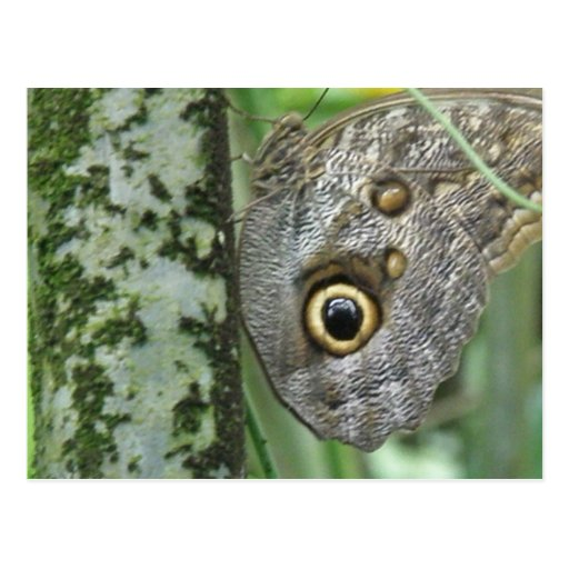 Barn Owl Butterfly Postcard