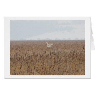 Barn owl hunting over reedbeds card
